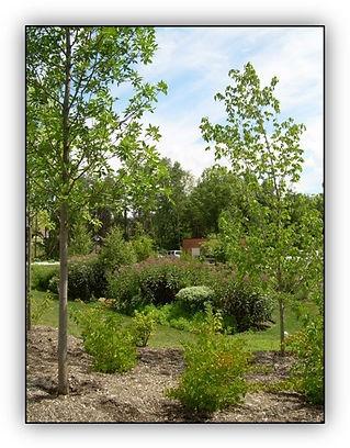 WSSI rain garden.jpg
