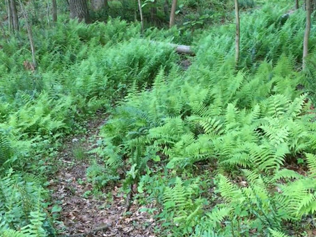Native plant landscaping: Three factors for success