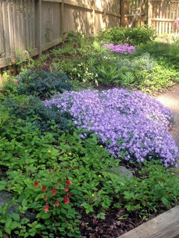 eastern columbine, creeping phlox, woodl