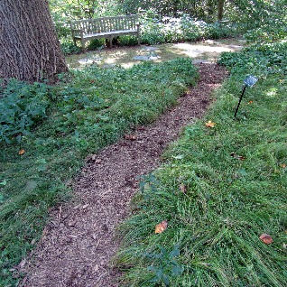 Carex%20pensylvanica%20Pennsylvania%20Se