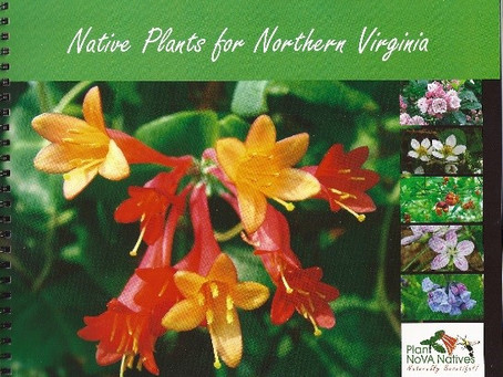 Beautifying your garden with natives, made easy