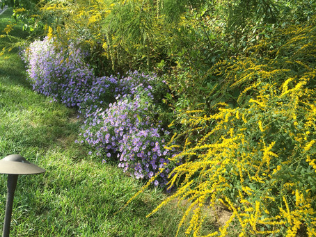 Using native plants to deal with drought (and deluges)