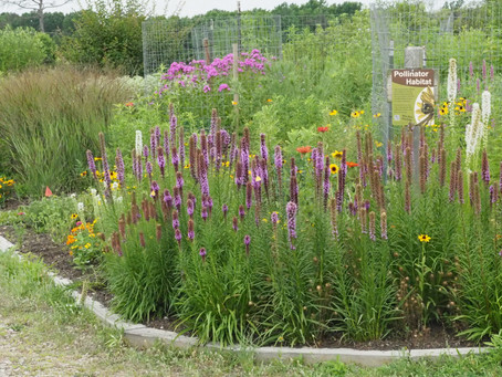 Summer is for visiting native plant gardens