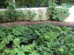 Beat the summer heat with a native plant shade garden