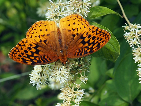 Native plant sales are booming