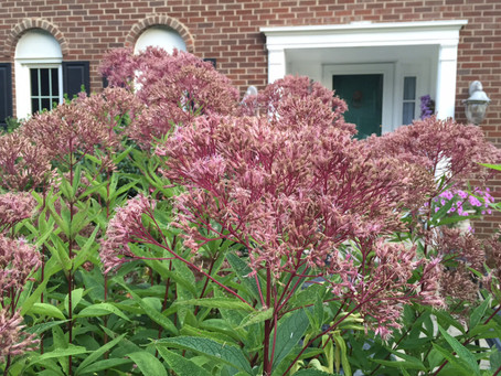 Creating Curb Appeal with NOVA Native Plants