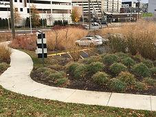 grasses in fall.JPG