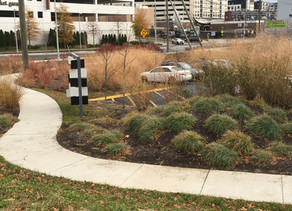 Native Plants in Public Places