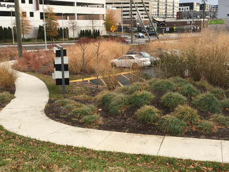 Native plants in public spaces