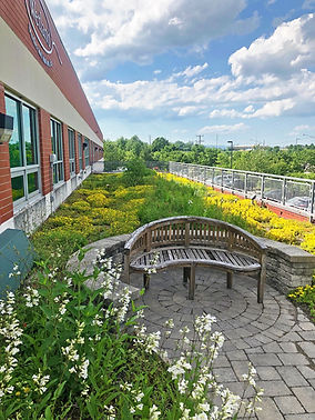 WSSI green roof.jpg