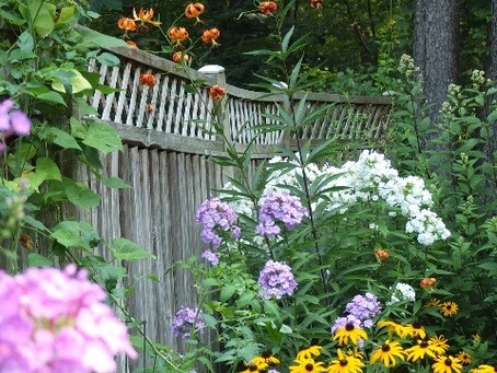 Do native plants sound foreign?