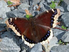 Befriending the butterflies all winter