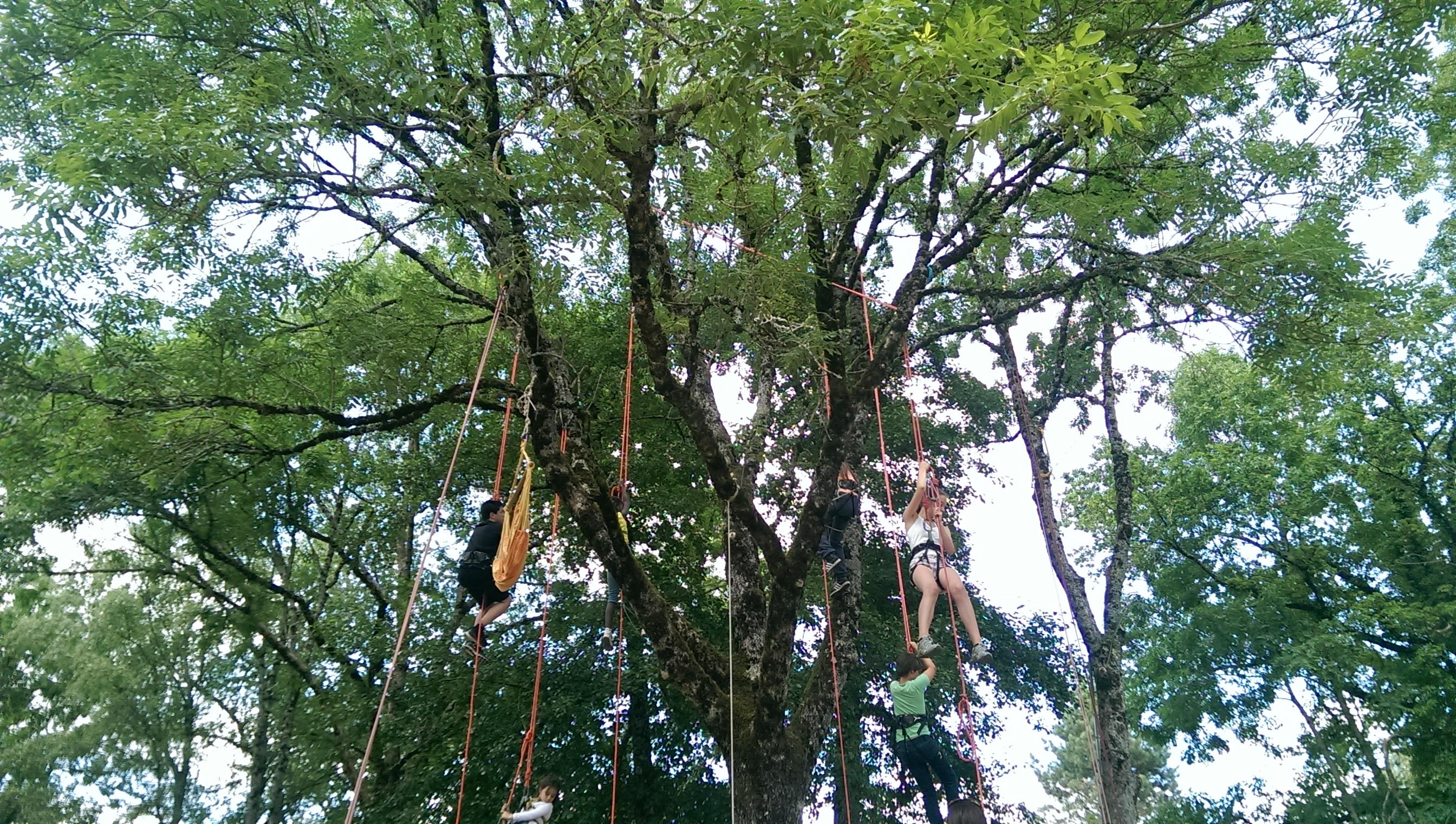 Arbr'acadabra Grimpe d'arbre lormes