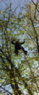 grimpe d'arbe accrobranche l'arbrea trucs settons morvan activité sport panneciere lac