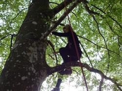 Arbr'acadabra grimpe d'arbre autun