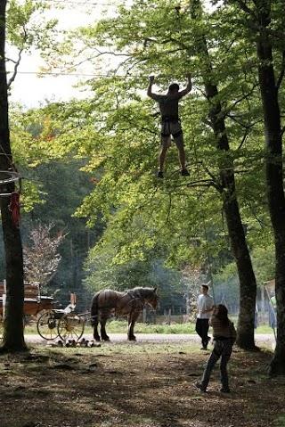 Arbr'acadabra grimpe d'arbre DREAM