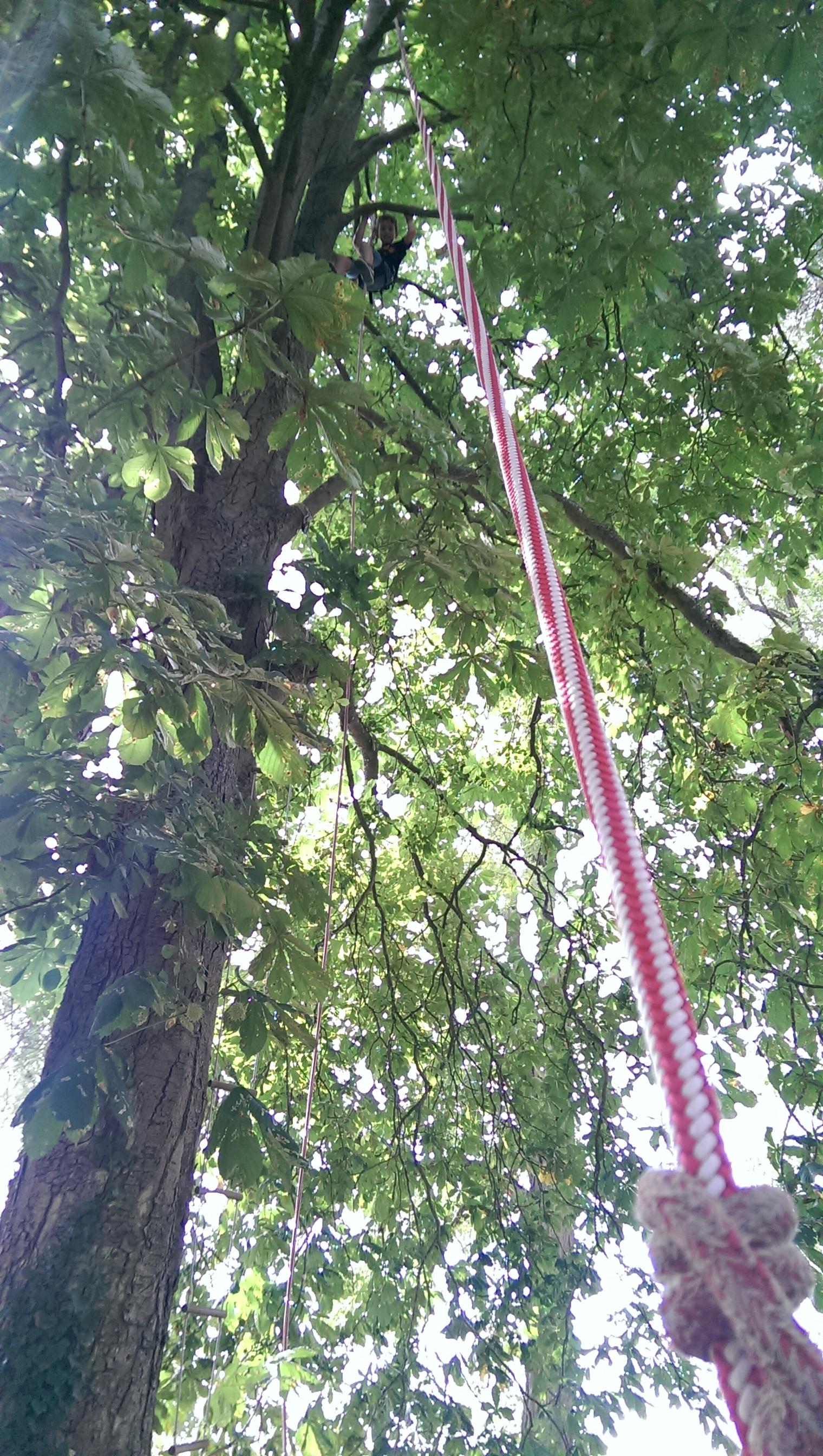 Arbr'acadabra grimpe d'arbre