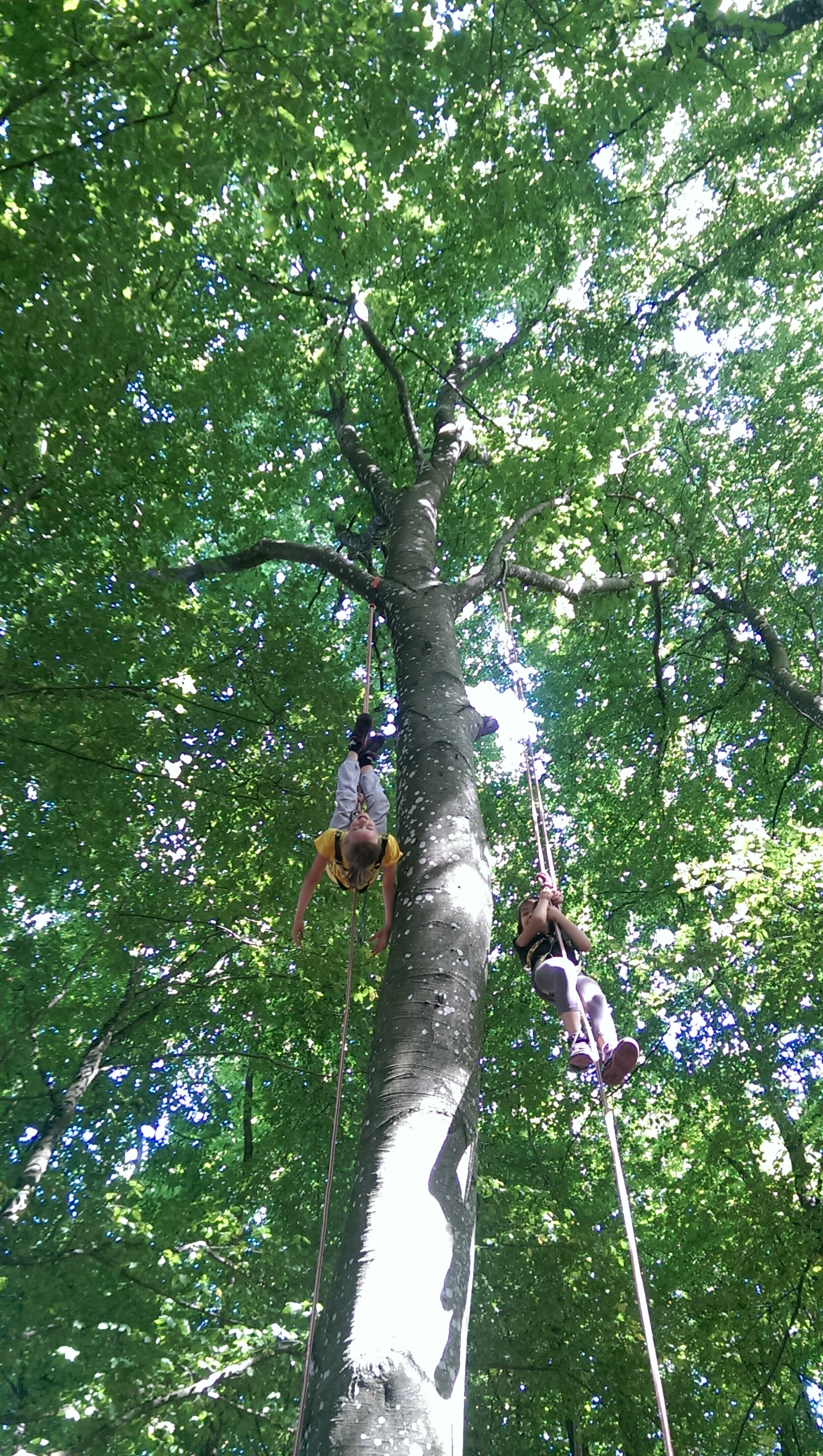 Arbr'acadabra grimpe d'arbre ouroux