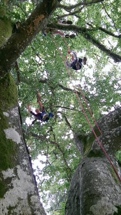 Arbr'acadabra grimpe d'arbre foot lo