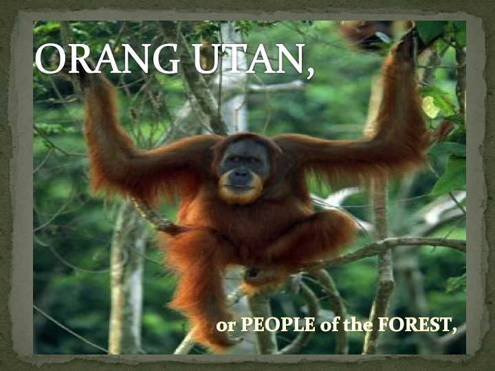 Orang Utan or People of the Forest