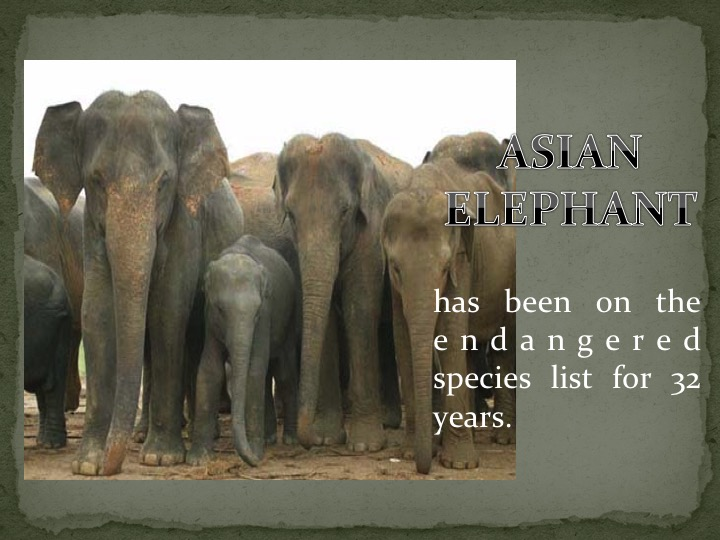 Asian Elephant has been on the endangered species list for 32 years.