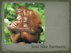 Just like humans
