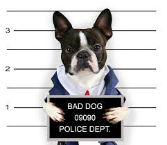 #1 Cause of Dog Behavior Problems