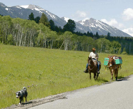 Woof leads the way followed by horse Concho and mules Big Mama and Snuffy Smith.