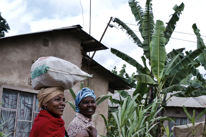 africa-banana-tree-carry-2063890_edited.