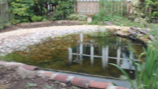 Westdale Juniour School Wildlife Pond