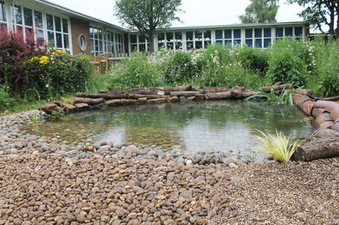 Westdale Junior School Wildlife Pond
