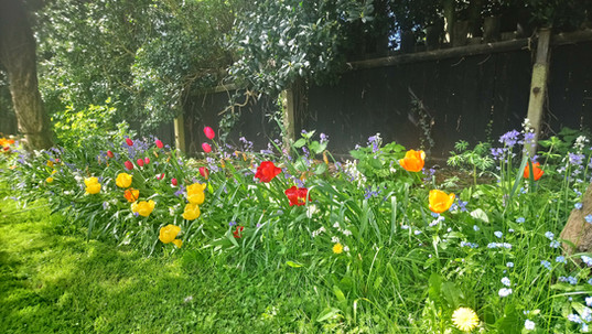 Tulips at Chellow Mount