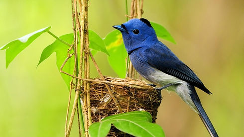 ws_Bird,_blue_852x480.jpg