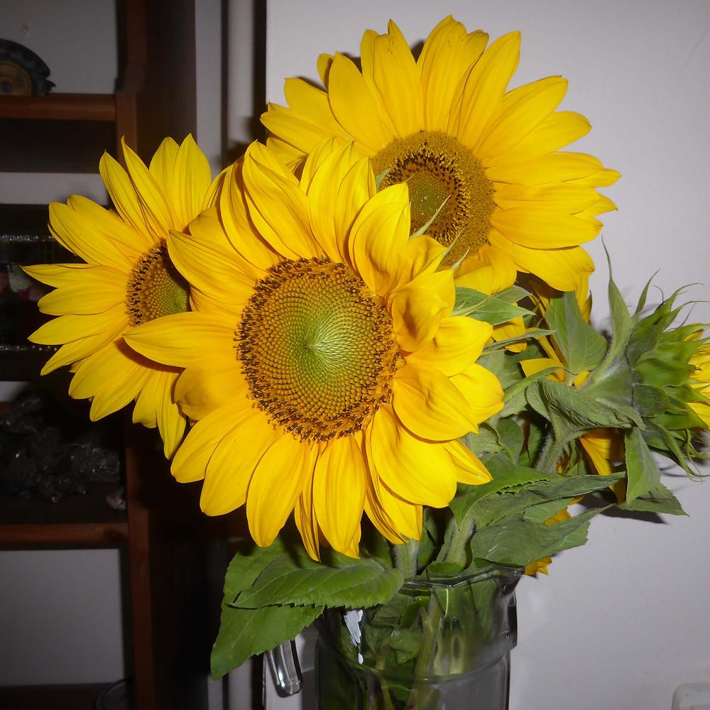 Sunflowers for Jan Millward