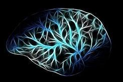 Cerveau.jpg