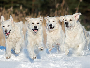 Tips For Winter Dog Care 🐾🐶❄
