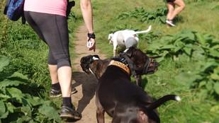 Dog training dorset somerset