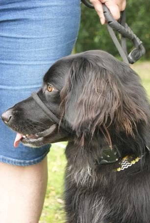Dog training dorset somerset-141907~2.png