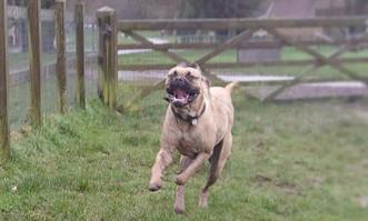 Dog training dorset somerset.jpg