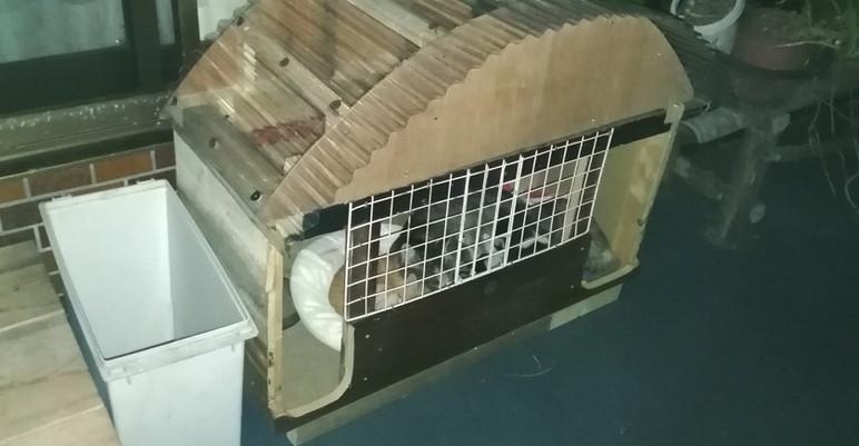 猫小屋設置(夜)