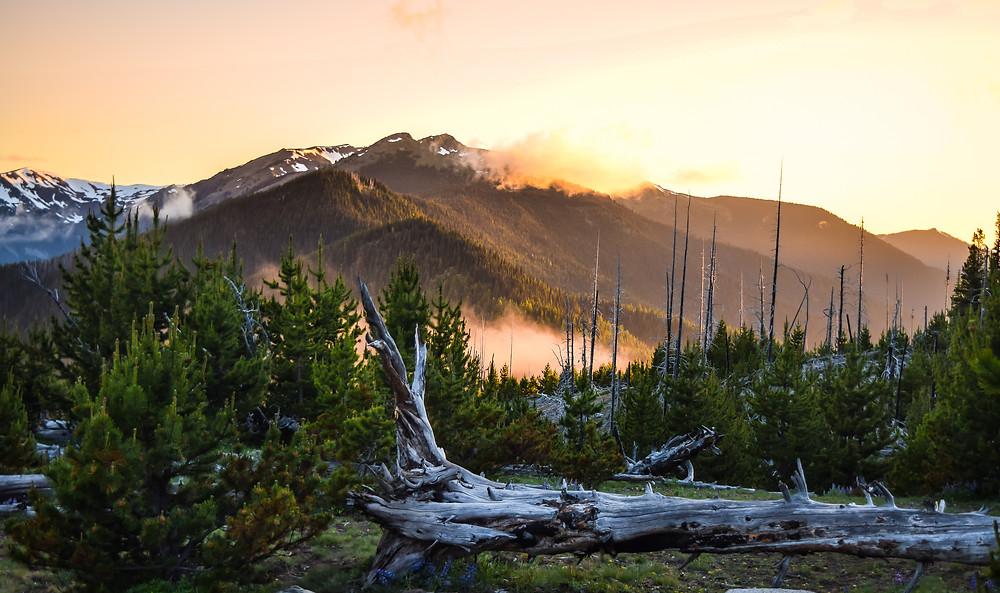 Olympic National Park, Washington: