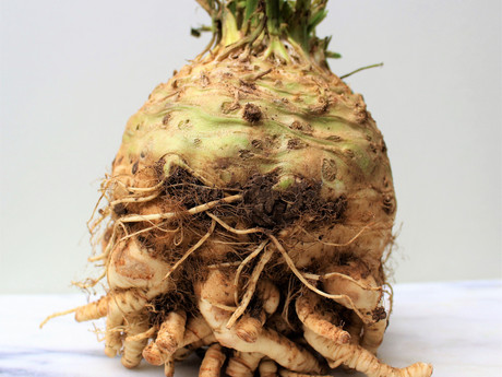 Celeriac shall go to the ball