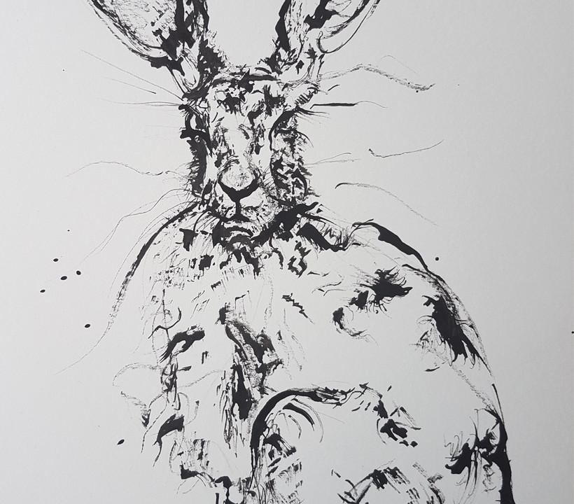 Grumpy Hare