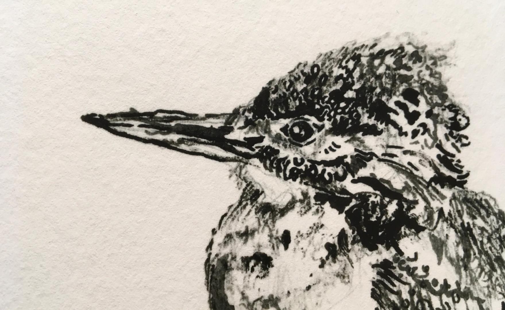 Kingfisher (close-up)