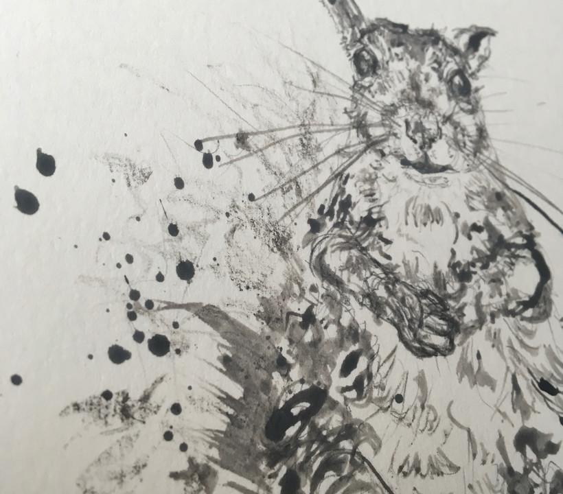 Grey Squirrel I (close-up)