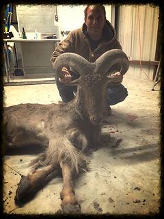 Aoudad Hunting