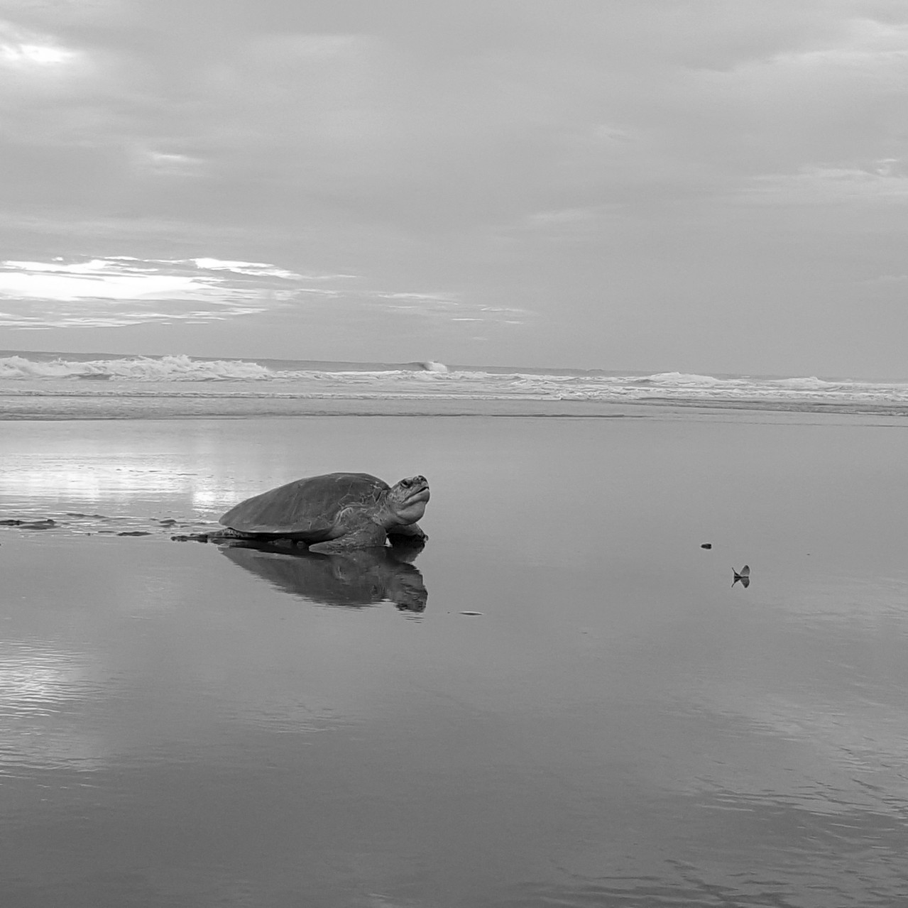 Holiday Okay | Meeresschildkröte