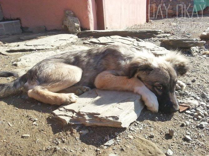 Miss GRACE ♥ Durch den Tierschutz in der Türkei auf die Sonnenseite des Lebens.