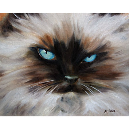 PRINT Himalayan Cat Eyes Kitten