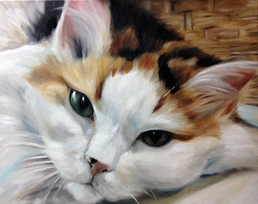 PRINT Calico Cat Eyes